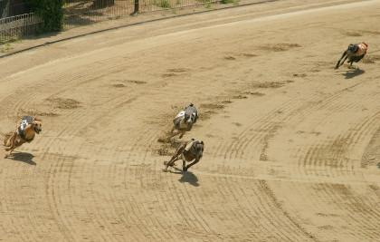 greyhound-betting